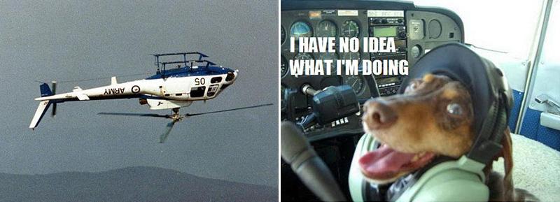no-idea-dog
